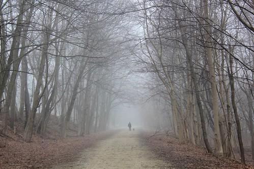 trees boston fog forest trail greatalleghenypassage