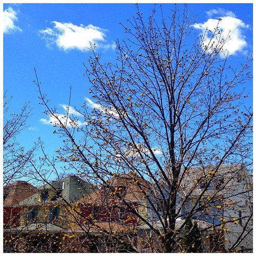 #fmsphotoaday April 26 - Enjoy the little things. No more bare branches... welcome, Spring buds!