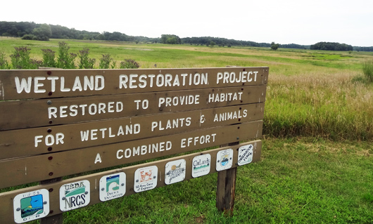 wetland-project