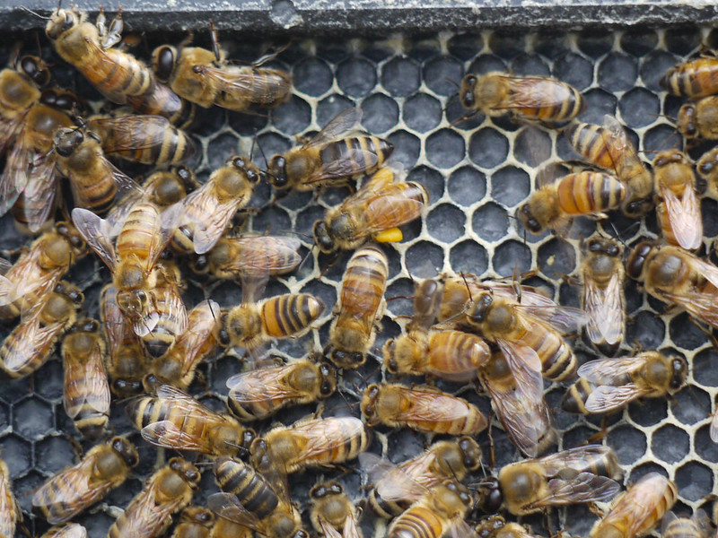 Full pollen sacs