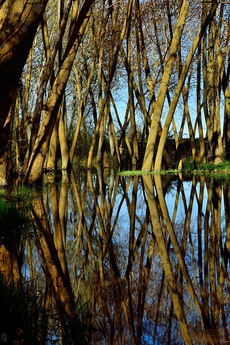 Symmetry, Wetland, Campos branch, The Canal of Castile, Valladolid, Spain