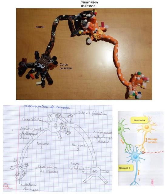 TP 4e - modélisation synapse