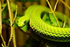 Again, a green snake!