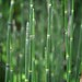 iPad Retina wallpaper (2048 x 2048) - horsetails by sklender