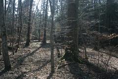 Wälder - Herreninsel