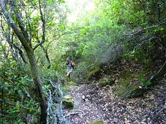 Dans la descente directe Bocca di Cateri - L'Agnu : sur le sentier en RG du Valdarone