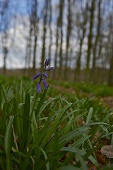 First Day of Spring in Dockey Wood