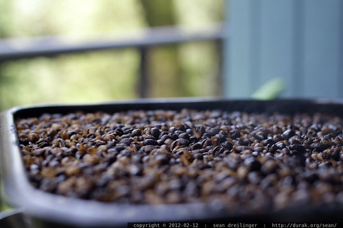 fresh roasted coffee cooling on the back deck    MG 8554