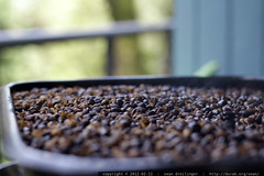 fresh roasted coffee cooling on the back deck    MG …