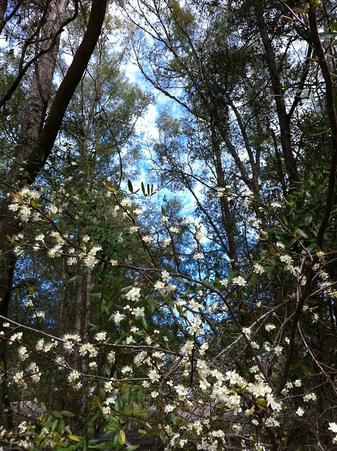 Gorgeous signs of Spring on today's trail run.