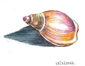 Seashell by Ansota