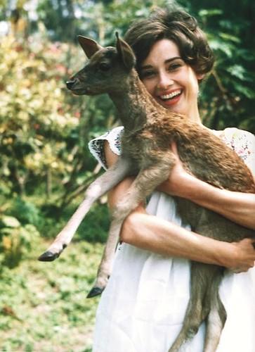 audrey-hepburn-with-her-deer