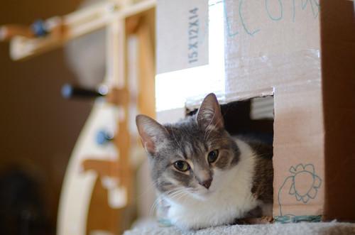 Roxy in Kitty Condo