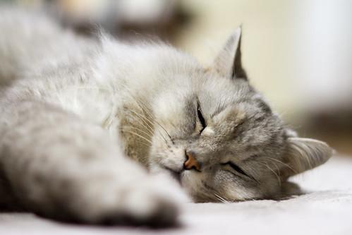 眠いにゃぁ