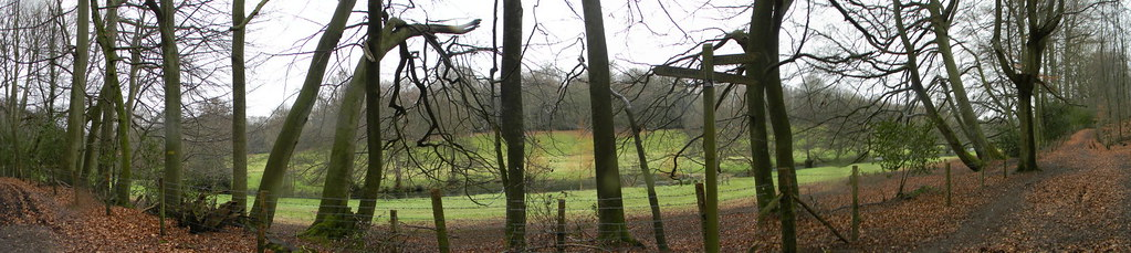 Row of trees Wotton Estate, A lot of vibrant greens today. Holmwood to Gomshall