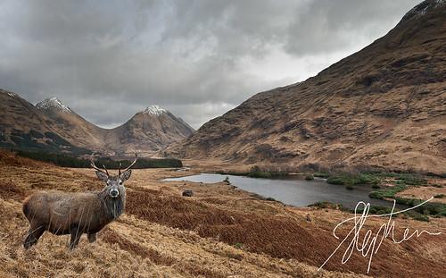 scotland glen deer etive pixelda