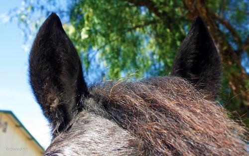 fuzzy ears