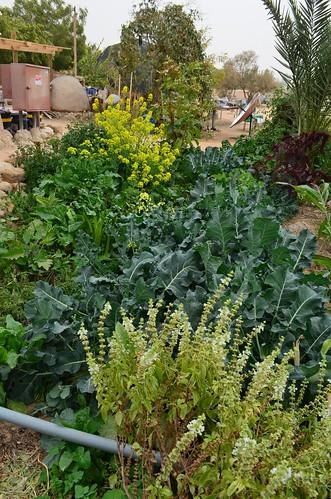由廚房區中水餵養長大菜園,幾乎完整提供給廚房和宿舍三餐食材所 需。