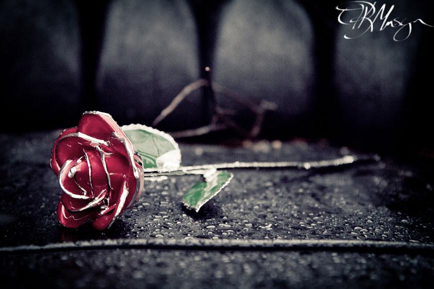 Forever-Rose