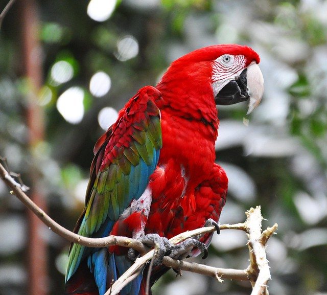 Macaw - Detroit Zoo