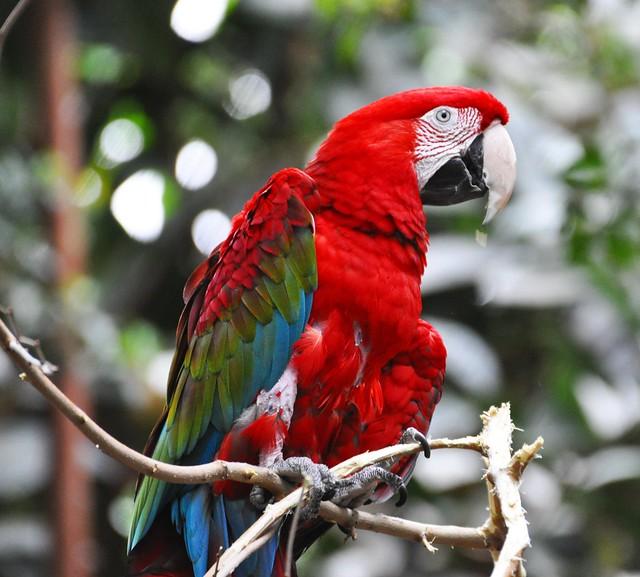 Macaw - Detroit Zoo