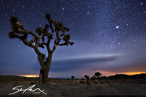 Lee Flat Astro Joshua Tree