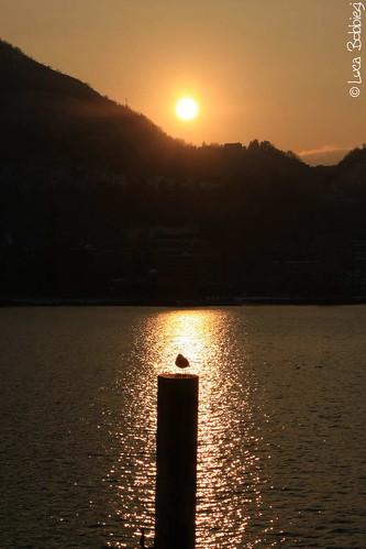 sunset lake como lago seagull gabbiano ef1740mmf4lusm canoneos40d
