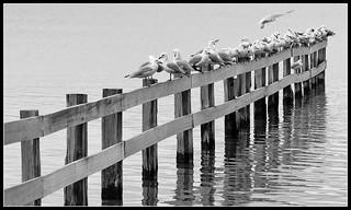 Mortimer Bay - Tasmania