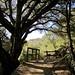 Fremont-Older-Picchetti-Stevens-Creek-2012-03-10