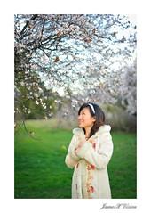 Sakura Portraits