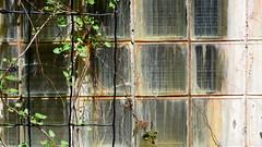 Cranbrook: glass brick window