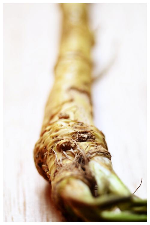 horseradish© by Haalo