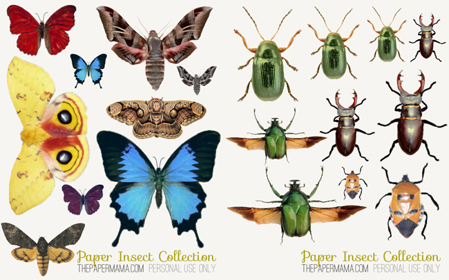 Paper Insect Collection Tutorial