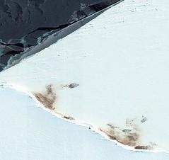 帝王企鵝的群聚。(英國南極考察隊提供)