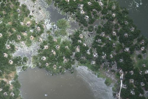 gulfofmexico water greenpeace aerial pollution oil bp foia usfws oilspill waterpollution usfishandwildlifeservice freedomofinformationact gulfoilspill 14june2010camera1card2