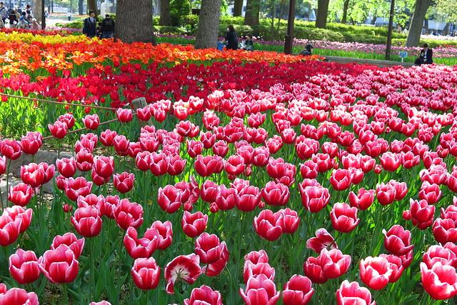 Spring = Flower Power!