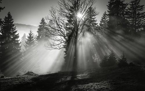 trees bw monochrome forest sunrise landscape switzerland blackwhite suisse arbres nikkor paysage forêt noirblanc d800 isanybodyoutthere nikkor247028