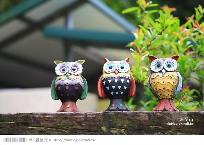 【新竹景點推薦】森林鳥花園~親子旅遊的好去處!在森林裡鳥兒與孩子們的樂園55