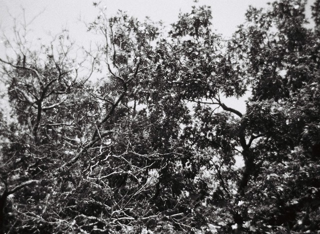 Another mess of tree branches and leaves