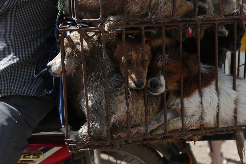 Closeup of dogs being taken to market