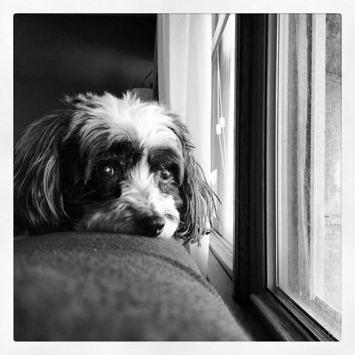 The last picture I took of Stella, via the iPhone app Instagram