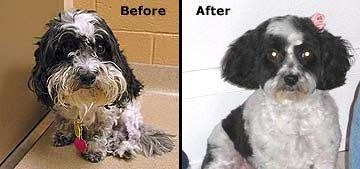 Stella's Humane Society picture next to a picture after her first grooming