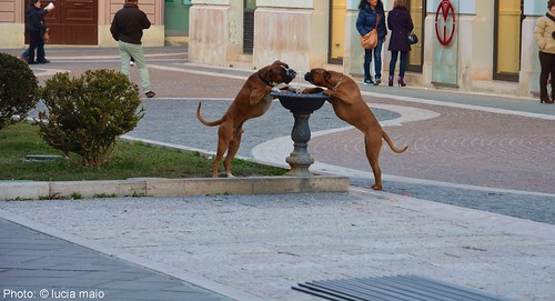 cane che bevono dalla fontana