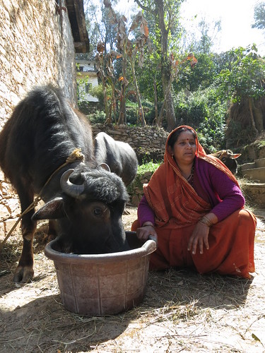Gita Kothari, crop-livestock farmer in India's northern state of Uttarakhand