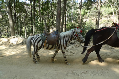 Zebra? - Baoshan, Yunnan, China