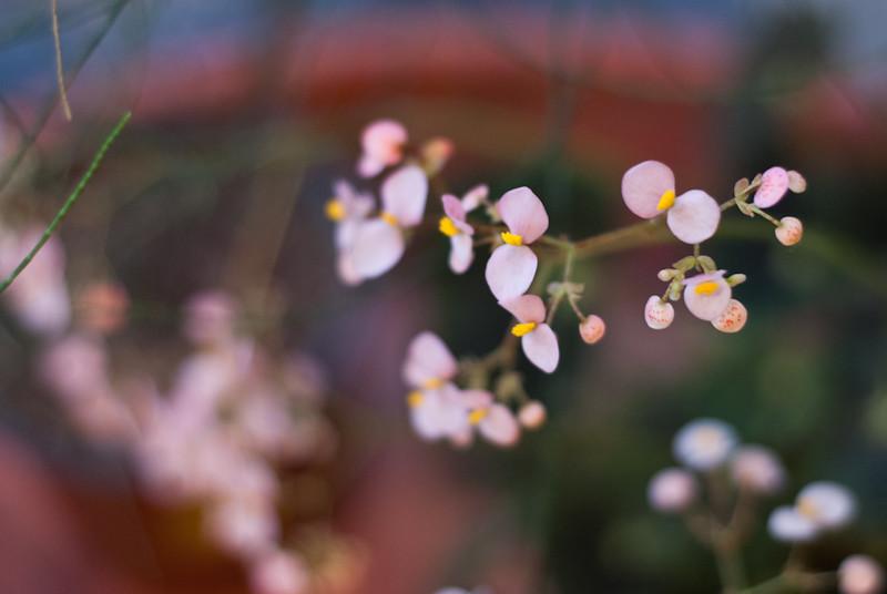 Japan like Image ! DSC_2682