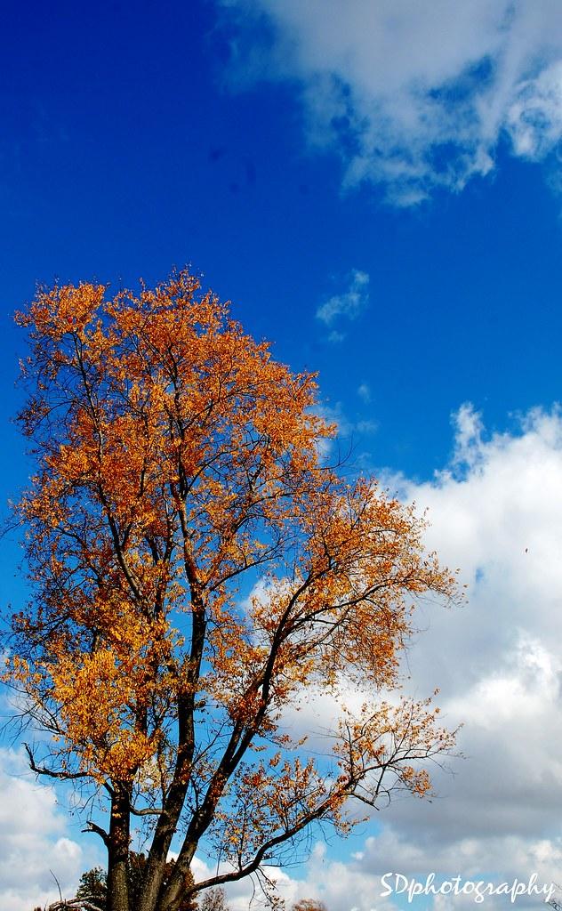 Autumn sky.