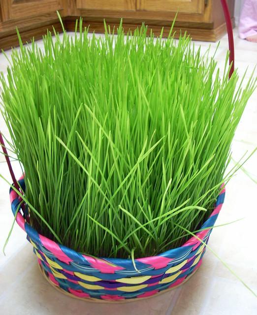 Home Grown Easter Grass
