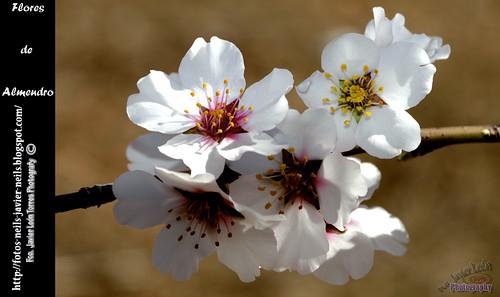 Flores Almendro by Neilsmultiusos