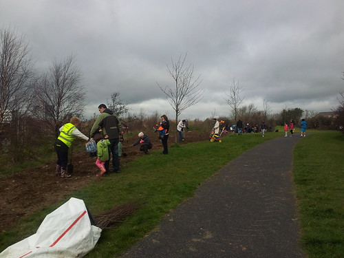 Planting trees along the freeway